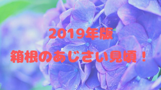 箱根のあじさい見頃2019!名所や登山電車のライトアップも紹介!