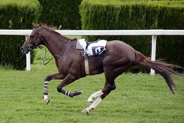 グリーンカル含有のテオブロミンの副作用とは?JRA競走馬への悪影響も