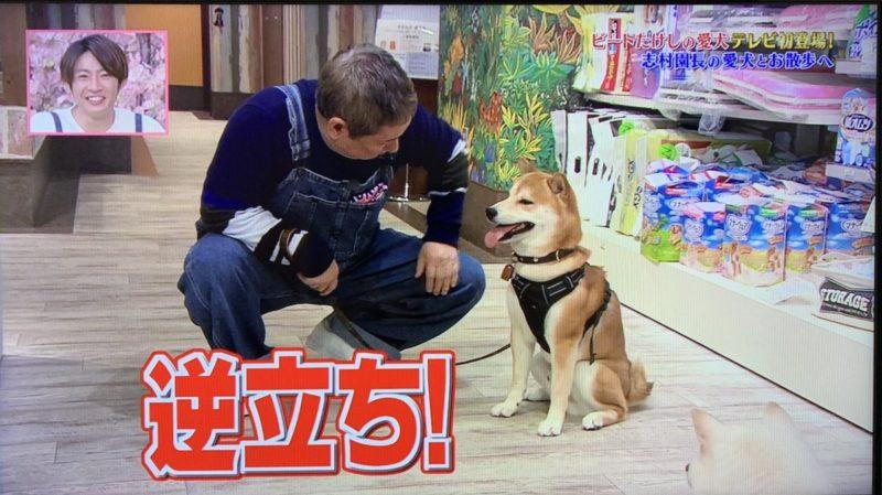 ビートたけしの愛犬ゴン