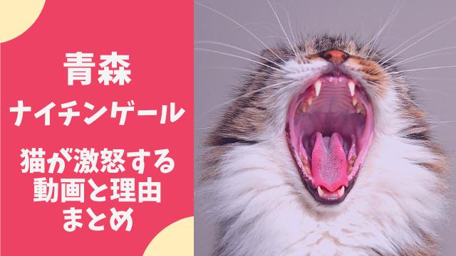 猫が青森ナイチンゲールで激怒する動画まとめ!狂暴化する理由は何?